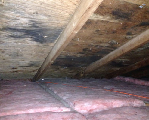 Mold in attic areas due to poor ventilation