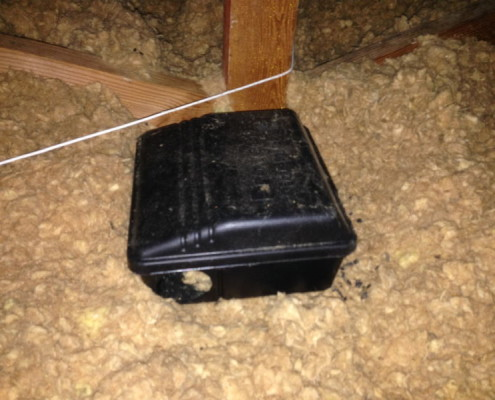 Active rodent problems in attic areas