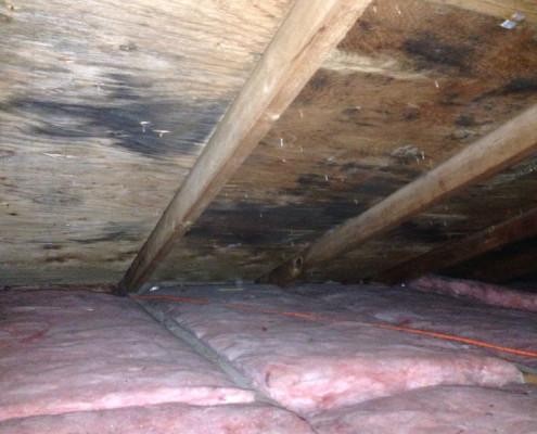 Mold in attic areas due to poor ventilation