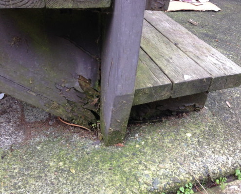 Rotten Wood Stairs
