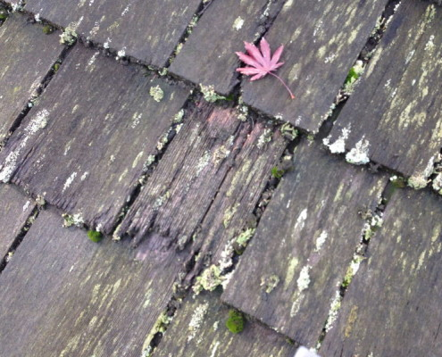 Rotten Wood Shingle Roofing Inspection